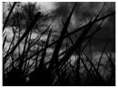 буря мглою небо кроет...