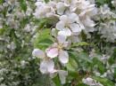 в Ботаническом саду 9.05.07