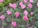 все то же Ботанический сад :)