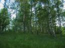 Соломенский парк