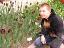 """Чорні тюльпани  """")"""
