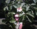 Ботанический сад.Цветок магнолии.