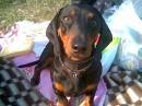 а это моя любимая собака)))))))Спайк