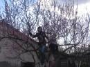три сестрицы вылезли на несчасное дерево...оно долго сопротивлялось...