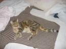 Моя кошка.*Муррр!*