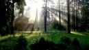 утреннее солнце в лесу
