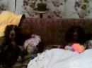 Малыши лажатся спатки