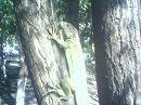 Игуана наводит ужас на птичек.....   ТРАВОЯДНОЕ несчастное)))))))