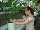 Я нелюблю растения! Бу-у-у!!! Р-р-р-р!!!:)