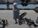 Хи... голуби непуганые !