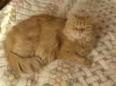 это моя маленькая рыжая кошечка...)