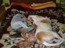 Это спят мой сынуля Кирюша и наш питбуль Робик!
