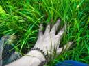 и даже призрак можен дотронуться к траве