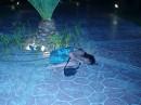 Буся напылася...и ей карашо под пальмой...кароче на утро под солнцем место забила!