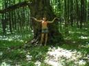 у старого дерева в лесу