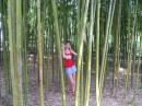 я в бамбуке