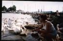 А белый лебедь на пруду... Венгрия, оз.Балатон