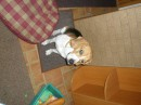 My stupid devil's dog:)