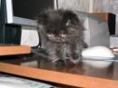 Синок моего котика