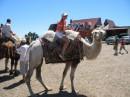 Не думала я,что верблюды такие мягенькие...
