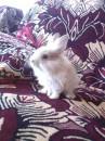 Кролик моей подружки Леси :)))))