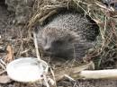 йожеги оказывается живут в чемто наподобие гнезд, интересно они там яйца чтоли высиживают