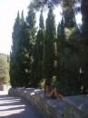 Кипарисы)))