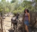 Такой вот ослик-симпатяга :-)