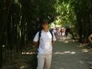 Бамбуковые джунгли ботсада
