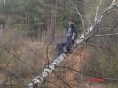 выезд в лес на дереве