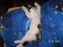 Мой котик))) Цем