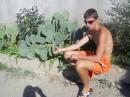 в Крыму растет все!!!почти! кактусы, гранаты, КИВИ...