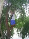 вишу на дереве)
