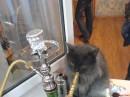 Грей тоже отловил свой приход)))