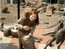 Волки в городе