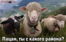ггг)))