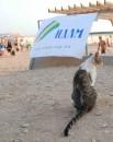 Банер организаторов и Кошка... При чем здесь кошка?