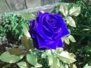 =\ мой любимый цветочек...