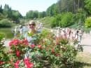 В кустах роз
