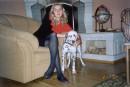 Люблю красивые дома и собак