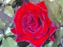 Люблю я эти цветы!!!!!