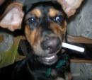 Моя любимая собачка:)