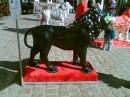 Самый красивый лев на всей выставке!