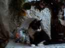 cat chernish