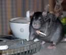 миша-под кайфом
