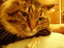 Обожаю этого кота)))