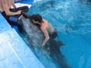 В дельфинарии...