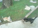 мои соседи в Феодосии