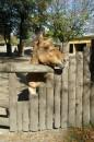 Фотки с похода в зоопарк:))