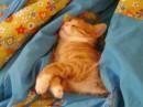 А это Лисик (кот моей сестры)